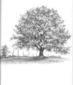 Browse Oak Tree Drawing created by professional drawing artist. You can also explore more drawing images under this topic and you can easily this page share Oak Tree Drawings, Tree Drawings Pencil, Landscape Pencil Drawings, Tree Pencil Sketch, Tree Sketches, Anime Comics, Trees Online, Posca Art, Old Oak Tree