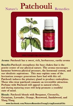 Patchouli essential oil - people seem to love it or hate it. This well know essential oil has a somewhat deserved reputation as the scent of the Hippy generation Young Living Oils, Young Living Essential Oils, Patchouli Oil, Earthy, Aromatherapy, Natural Remedies, Health Fitness, Essentials, Essential Oils