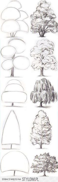 sketches of trees on Stylowi.pl