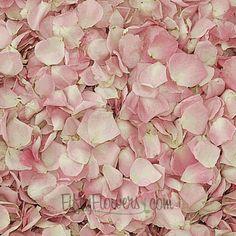 Lydia Petite Pink Rose Petals; 1000 petals/25 cups for $69.99