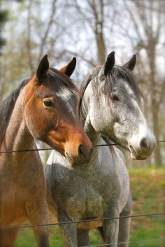 Kachina and Moon, two Nakota horses.  Article about Flowing Springs Farm, in Chester County, PA, that uses Nakota horses in therapy sessions.