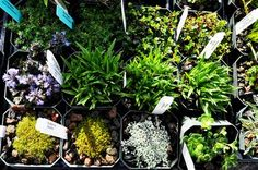 Want to know which Fairy Garden plants do best? Check out this lovely display, and be inspired. #fairygardenplants
