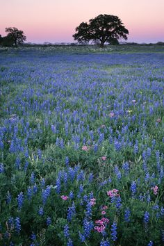 America's Most Beautiful Wildflower Bloom  - CountryLiving.com