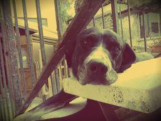 My dog, my love
