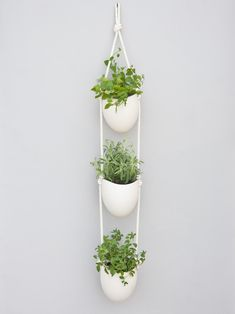 a small kitchen herb garden doesnt just add color to the room it adds scent taste and a dynamic element as well. To grow herbs stylishly and save precious countertop space try this wall-mounted ceramic container set from Light Ladder. Diy Hanging Planter, Hanging Herbs, Hanging Herb Gardens, Vertical Planter, Window Hanging, Herb Garden In Kitchen, Kitchen Herbs, Wall Herb Garden Indoor, Culture D'herbes