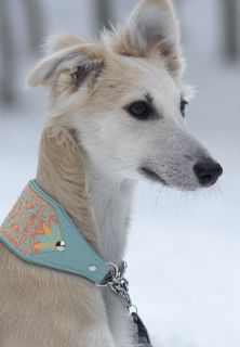 Long haired Whippet. This might be the prettiest dog ever!