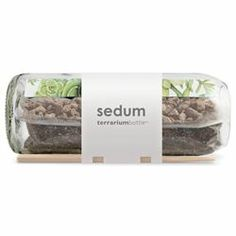 "Kate Donahue Doula loves her Sedum Terrarium Bottle! Here's what she had to say... ""I bought one of these and I love it. I wish I had them in every window sill now!"""