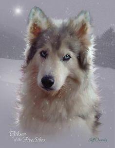 Siberian Husky portrait by Jeff Owenby @ Autumn Wind Studios Beautiful Creatures, Animals Beautiful, Cute Animals, Pet Art, Cool Art, Awesome Art, Dog Portraits, Animal Paintings, I Love Dogs