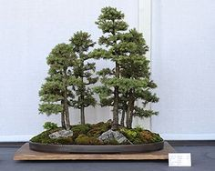 A bonsai forest planting.Living in the middle of the city doesn't mean you can't have your very own forest. www.gardengurulawntools.com