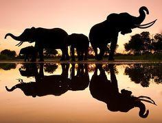 Elefanter vid vattenhålet.