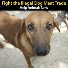 Animal Rescue - Pet Shop - Festival Dogs Apron