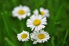 Essbare Pflanzen, Blumen, Blüten und Wildpflanzen