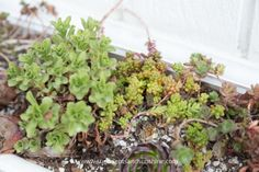 Find out how to improve the health of your succulents with fertilizer