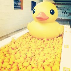 Visit the Rubber Duck and ducks at the Gallery by the Harbour.