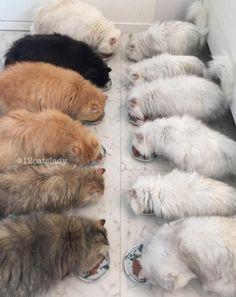 'A dama com 12 gatos' faz sucesso com fotos de seus persas