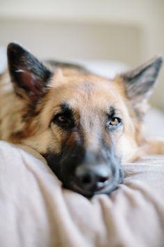 El perro más bonito del mundo