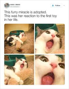 v/s Meow: How Technology Has Changed Cat's lives Want more cute kittens? Click the photo for more!Want more cute kittens? Click the photo for more! Funny Animal Jokes, Funny Dog Memes, Cute Funny Animals, Funny Animal Pictures, Cute Baby Animals, Funny Cute, Funny Sarcasm, Pet Memes, Funny Comedy