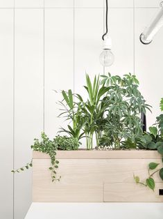 MARIE SIXTINE's New Headquarter - Picture gallery Cool Office Space, Office Space Design, Workplace Design, Office Workspace, Office Interior Design, Office Interiors, Plant Wall, Plant Decor, Plant Box