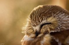 OK wait... hold up... this picture may have singlehandedly cured me of my owl phobia.