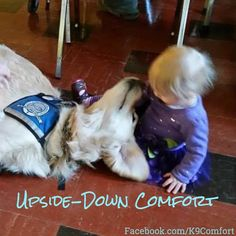 Upside-Down Comfort with Zoey Comfort Dog! #dogs #dog #dogsofinstagram #k9comfortdogs