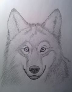 Sketch of a wolf - I drew it with this yt tutorial: https://www.youtube.com/watch?v=h1hNe7jF4JM