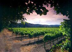 St Francis Winery and Vineyard: Sonoma, California