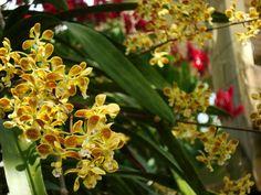 Janelas para o passado: Orquídeas