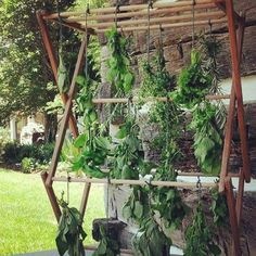 Cannabis Drying Rack Impressive 20 Creative Ideas For Decorating With Ladders  Pinterest  Herb Decorating Design