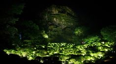 teamLab illuminates Japanese forest with digital projections