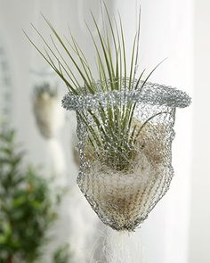 Do it yourself mit mömax Tillandsien DIY With a cleaning sponge made of wire - a real eye-catcher :- Garden Crafts, Garden Art, Garden Design, Air Plant Display, Plant Decor, Diy Planters, Hanging Planters, Air Plants, Indoor Plants