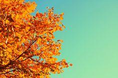 20 Stunning Fall Photos