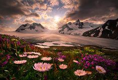 Alaska + Sun + Clouds + Glacier + Snow + Mountains + Flowers