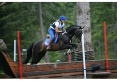 Akhal-Teke Horse...