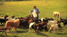 More and more, people are raising goats to supplement their income.  The Monitor's Kenny Burgamy recently spoke with a UGA Extension agent and a West Georgia goat producer, both of who are advocates for the benefits of goat ownership.