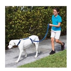 >> Click to Buy << Nylon Pet Dog dog harness Leashes for large dogs  Instant Trainer Rope Walking Training dog harness leash Blue #Affiliate