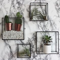 Vertical gardens . Are you a plant lover?
