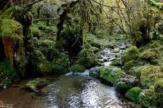 Surnomée la petite Amazonie des Pyrénées, la forêt des Hautes Baronnies, que l'on traverse en remontant la Gourgue d'Asque et le ruisseau de l'Artiguette, est une des splendeurs cachées de la région. La végétation y est tellement luxuriante qu'un sentier d'interprétation botanique y a été aménagé il y quelques années. Rando, Pyrenees, Walks, Road Trip, Hiking, Camping, River, Nature, Outdoor