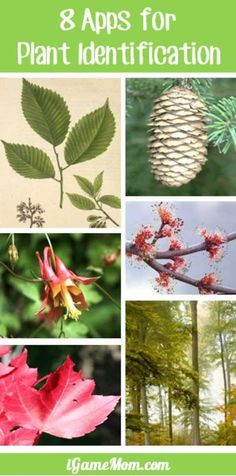 8 plant identification apps that will make your walk in the park or anywhere with trees, bushes, flowers more interesting. You can identify plants by leaves, flowers, tree bark, and many other features. Great learning tools to have on your phone while outside with kids.