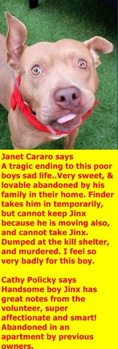 MURDERED 11-1-2017 --- Hello, my name is Jinx. My animal id is #10931. I am a male tan dog at the Manhattan Animal Care Center. The shelter thinks I am about 3 years old.  I came into the shelter as a stray on 27-Oct-2017.  http://nycdogs.urgentpodr.org/192569-2/