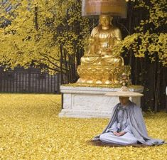 A ginkgo tree shrouds the Gu Guanyin Buddhist Temple in Xi'an, Northwest China's Shaanxi Province, with a gorgeous golden carpet of leaves. The tree is said to have been planted by the Tang Dynasty emperor Taizong. Golden Tree, Golden Leaves, Autumn Leaves, Yellow Sea, Yellow Leaves, Bright Yellow, Ginko Tree, Old Trees, Buddhist Temple