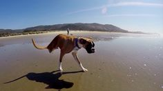 GoPro: Duncan The Two-Legged Pup.. .*UNBELIEVABLE!..sooo moving. Bless those who have nurtured him.