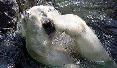 www.polarbearpictures.org