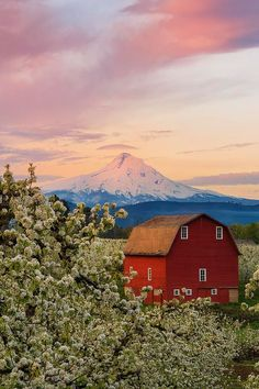 Hood River Fruit Loop, Oregon - Spring Blossoms Sunrise is a photograph by Ryan Manuel. Sunrise in the Hood River area during the Blossom Festival. What a sight, hundreds of acres of blossoming fruit trees, this is a pear farm. Highly recommended to check it out during the blossom festival and during the harvest season.