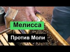 пчеловодство --№106 Мелисса Против Моли. Bee Keeping, Projects To Try, Beehive, Bees, Honey, Videos, Bee Skep