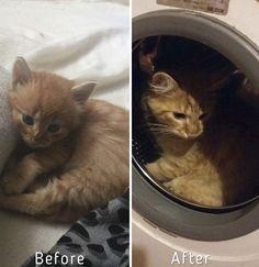 Garota resgata mais de 350 gatos abandonados em dois anos