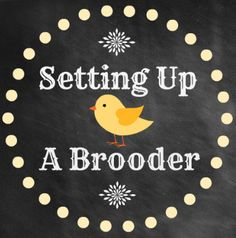 Baby Chicks 101: Setting Up You Baby Chicks Nursery {The Brooder}