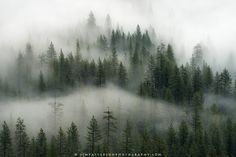 A particularly foggy morning in Yosemite National Park provided some amazing atmosphere as the low mist mingled with the forest of trees below.
