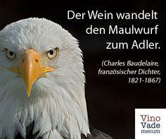 Bald Eagle, Cry Quotes, Eagle