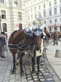 Spanische Hofreitschule in Wien, Wien Spanish Riding School, Lipizzan, Vienna, Horses, Horseback Riding, Horse