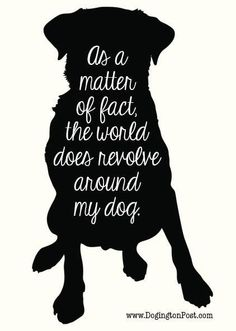 Remy is the greatest blessing we could have ever asked for. Our world is complete with her by our side Remy is the greatest blessing we could have ever asked for. Our world is complete with her by our side I Love Dogs, Puppy Love, Cute Dogs, Cockerspaniel, Dog Lady, Dog Signs, Crazy Dog, Animal Quotes, Dog Mom